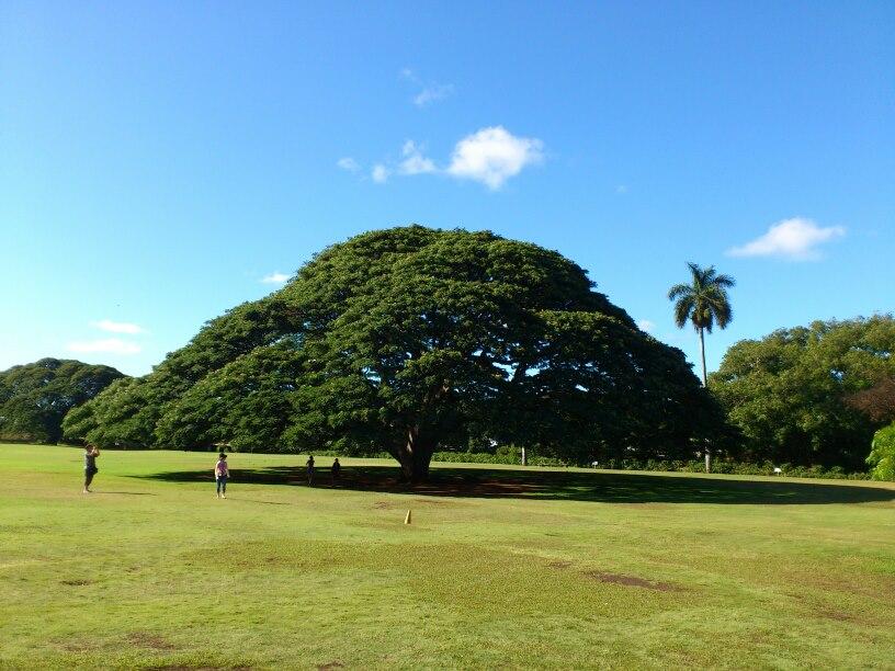 ハワイ 基本情報 注意事項