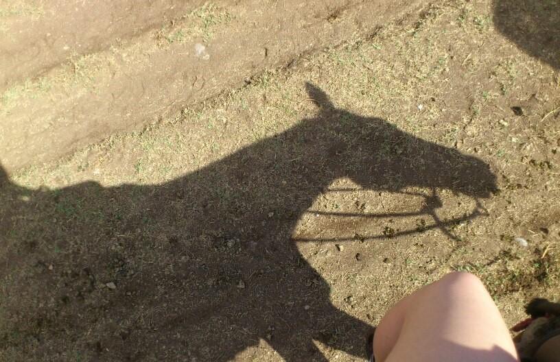 クアロア乗馬ブログ