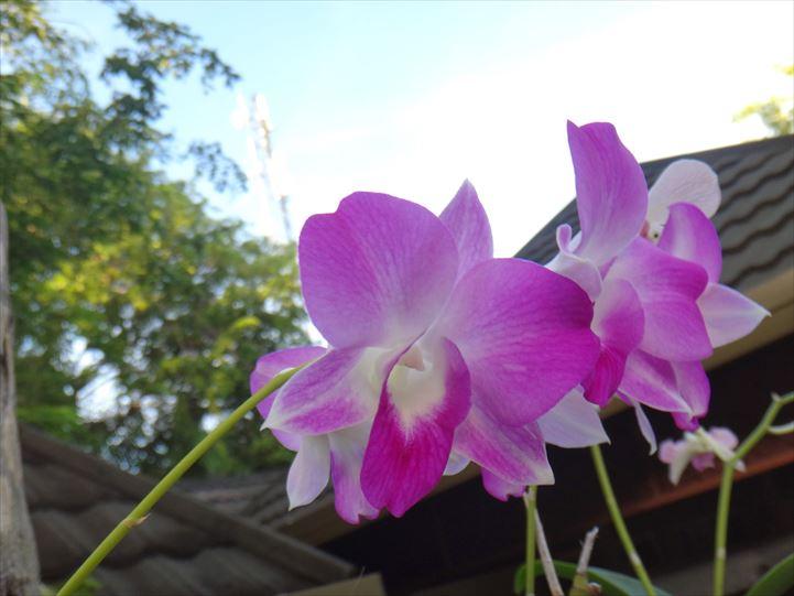 モルディブ 花