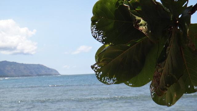 ハワイ 生水